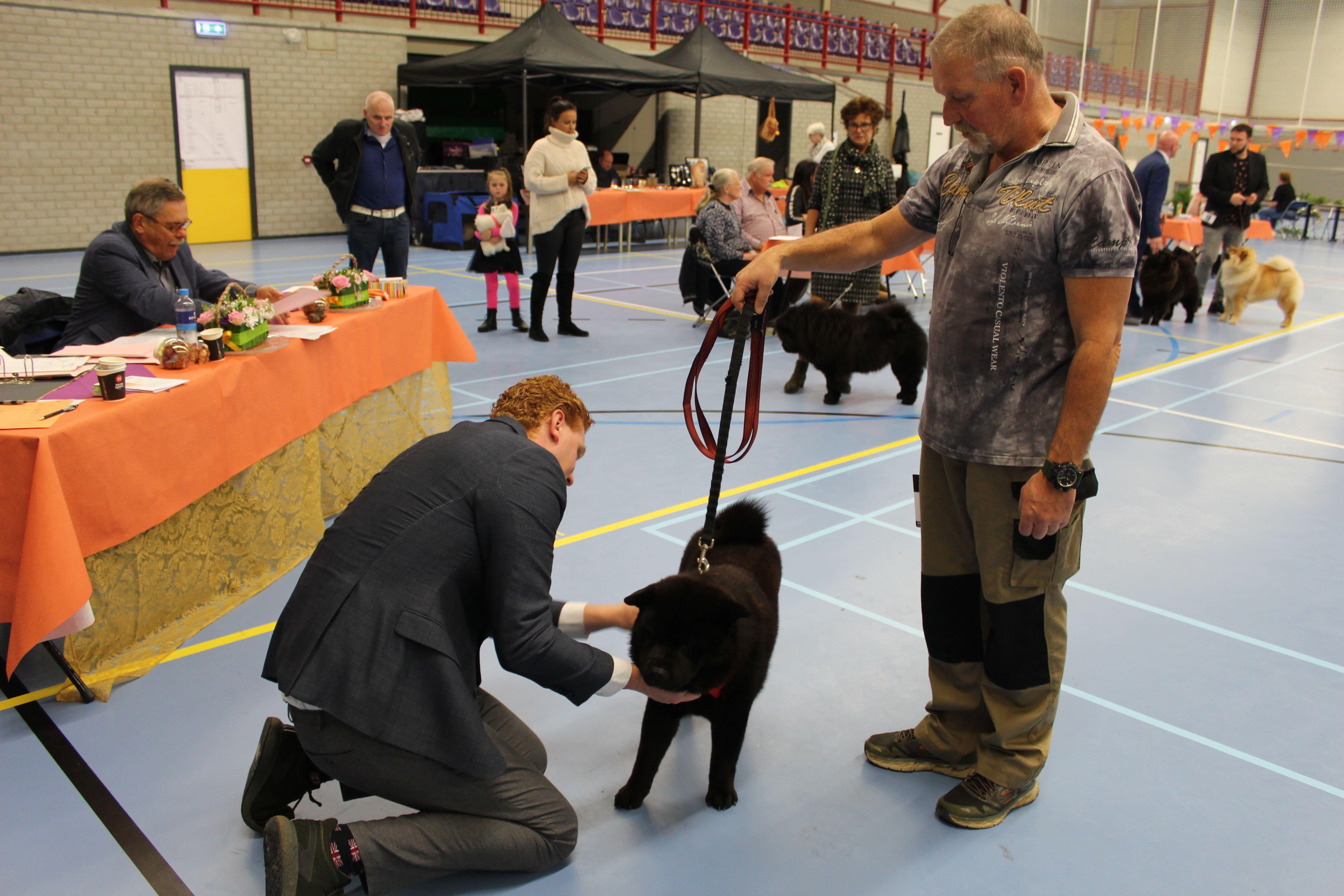 catnr-19-Mayka-Lying-van-Juttersburch