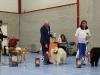 4-plaatsing-kampioensklasse-reuen