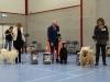7-plaatsing-puppyklasse-teven