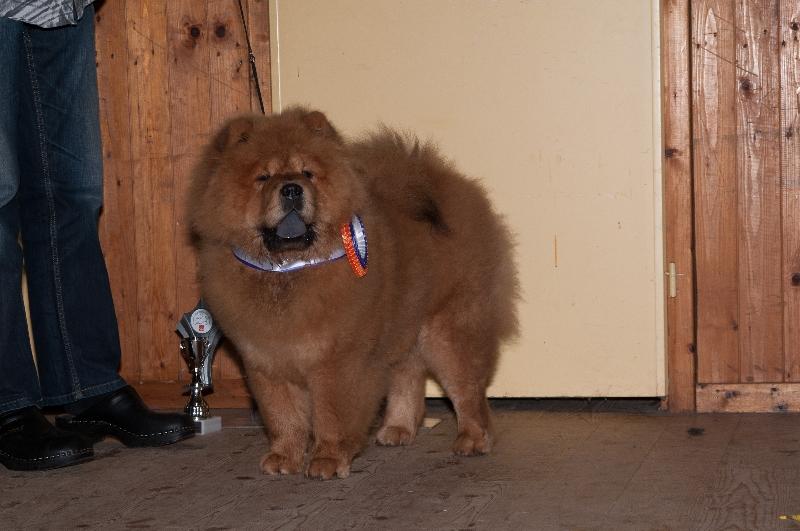 foto-beste-puppy-leon-scholten