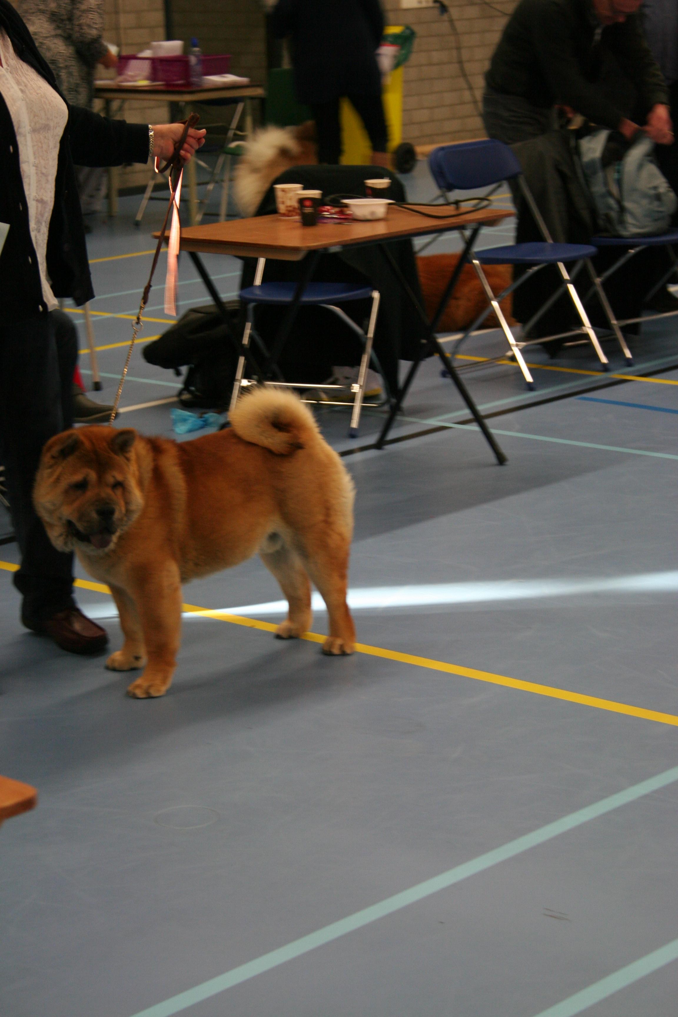 jongste puppy klasse reuen