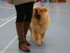 puppy reu