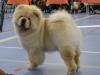 Beste Jongste Puppy