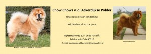 advertentie Ackerdijkse Polder - 2013 - CCVH