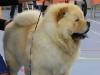 Beste Puppy